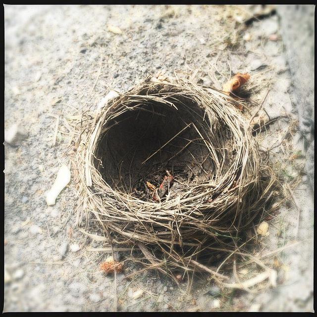 empty nest pic